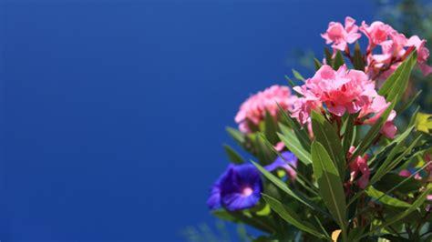purifier l air d une chambre ces 8 plantes purifieront l air de votre chambre pour des