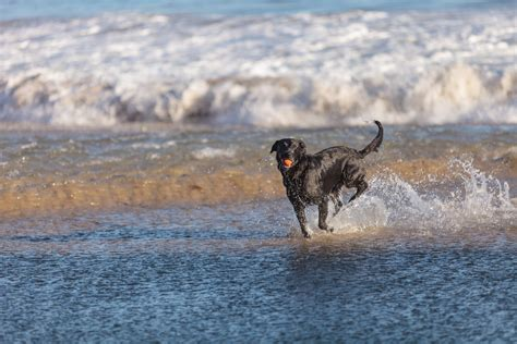 friendly beaches cape cod cape cod beaches beaches in cape cod ma era cape real estate