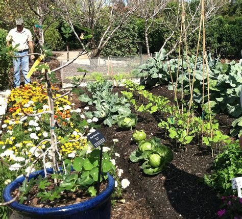 Florida Vegetable Gardening Growing Resilience The Quiet Florida Vegetable Garden