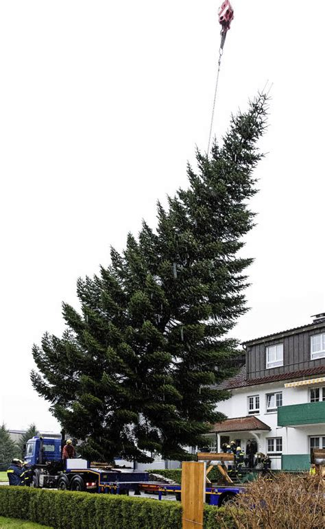 wann fängt ein tannenbaum f 252 r berlin waldkirch badische zeitung