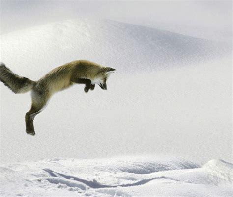imagenes increibles de animales increibles fotos de animales friki net