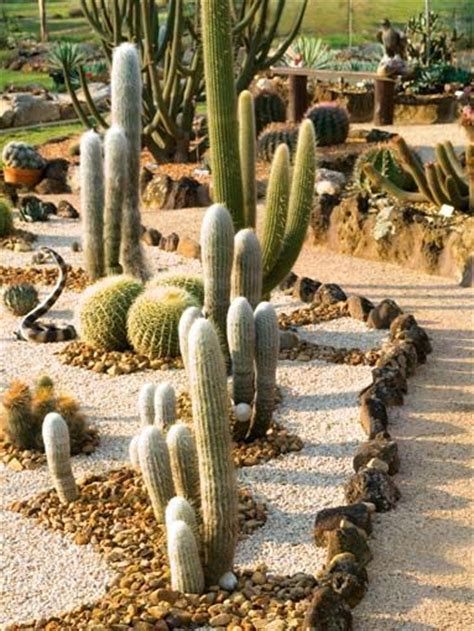 backyard cactus garden 429 best images about desert landscaping ideas on