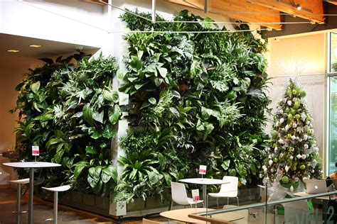 indoor vine indoor tropical green wall