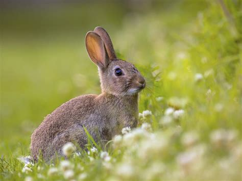 rabbit images spans of different rabbit breeds you must