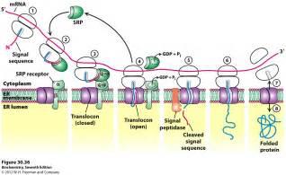 Diseases Of Medicinal Plants - signal recognition particle srp signal recognition particle