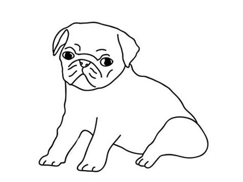 how to draw a pug for how to draw a pug coloring page jpg litle pups