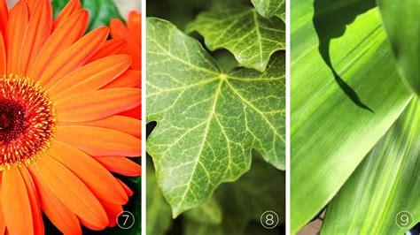 Image Gallery Nasa Chrysanthemum Air | image gallery nasa chrysanthemum air