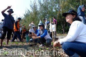 Bibit Cemara Laut mahasiswa baru udinus tanam bibit mangrove dan cemara laut