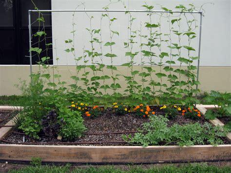 Small Backyard Vegetable Garden House Design With DIY