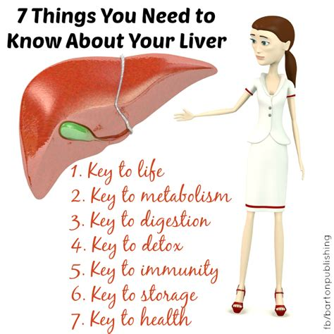 When Do You Need To Detox Your by 7 Things You Need To About Your Liver