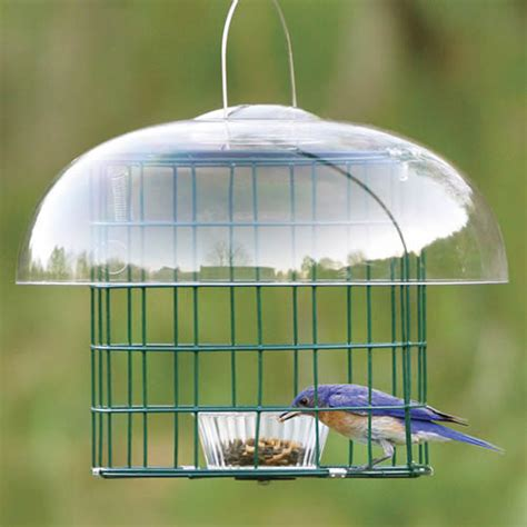 Bluebird Feeder Bluebird Feeders Meal Worm Crumble Treats