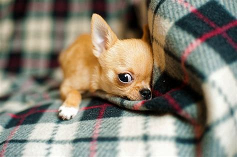puppy cries in crate at puppy at in crate causes and how to stop your puppy from all
