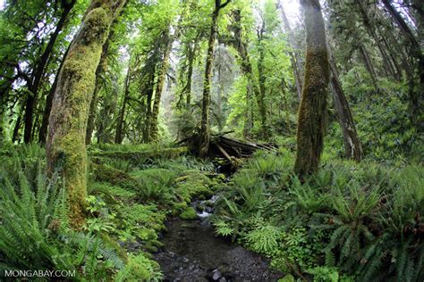 10 Facts About The Forest Floor by 10 Rainforest Facts For 2017