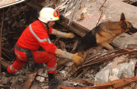 search and rescue dogs dogs rescue dogs and search rescue heroes hairstyles