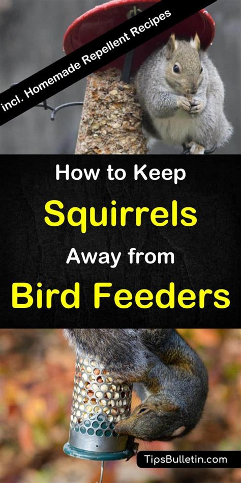 suet recipes for squirrels dandk organizer