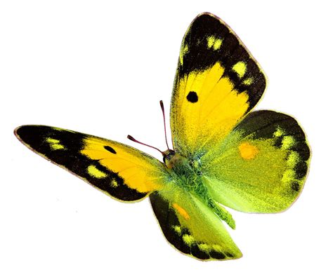 what does the color yellow symbolize what does a yellow butterfly symbolize you probably don t