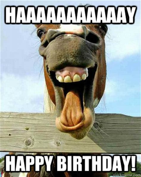 Horse Birthday Meme - funny birthday quotes with horses quotesgram
