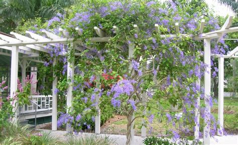 Pergolas With Climbing Plants Pictures Pixelmari Com Pergola Plants For Shade