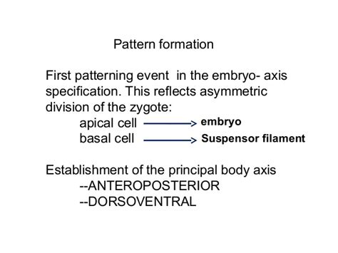 pattern formation asymmetry dev bio first lecture ppt 1