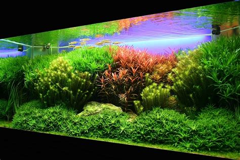 Aquascape Contest Plantas De Tallo Plants Amp Shrimps