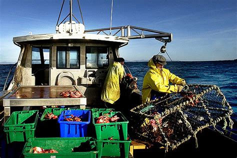 fishing boat jobs new zealand industry fishing for control stuff co nz