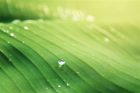 free stock photo of banana leaf blur bright