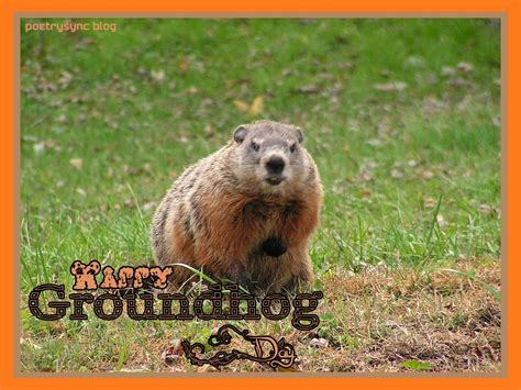 groundhog day jokes groundhog quotes quotesgram