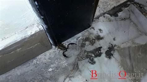 comune di brindisi ufficio anagrafe nel corridoio comune sbuca uno scorpione foto
