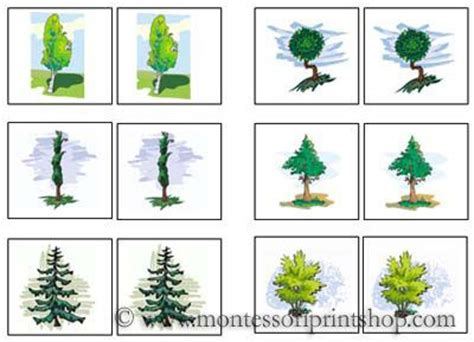 montessori tree printable 17 best images about learning montessori botany on