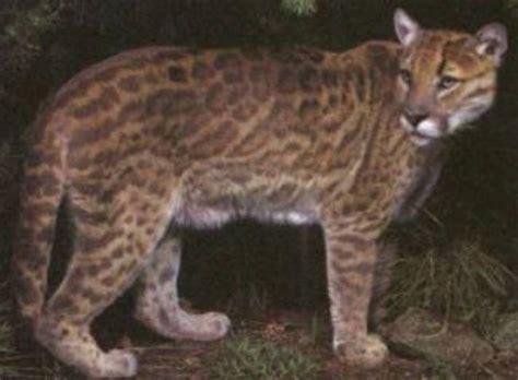 real  incredible animal hybrids   world