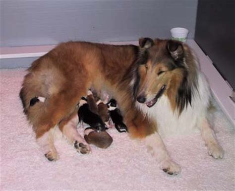 how to care for newborn puppies and their newborn puppy care great puppy care tips kanineklub