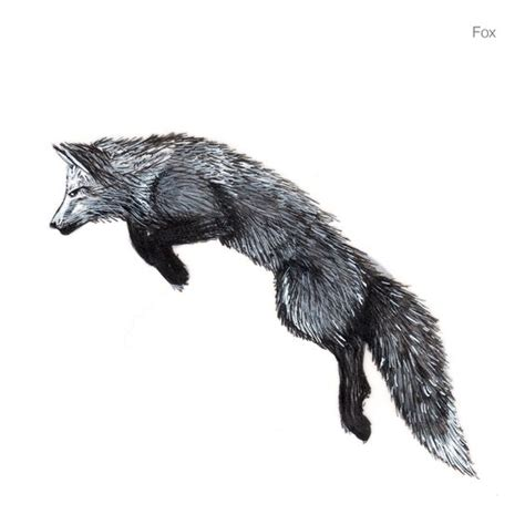 black and white mr fox a pipe design fox drawing displaying 19 gt images for white fox