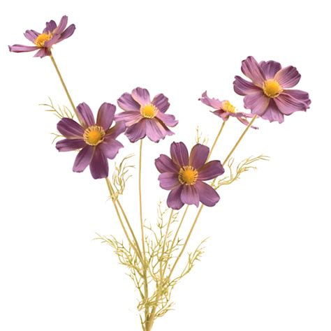 luxury purple blue cosmos