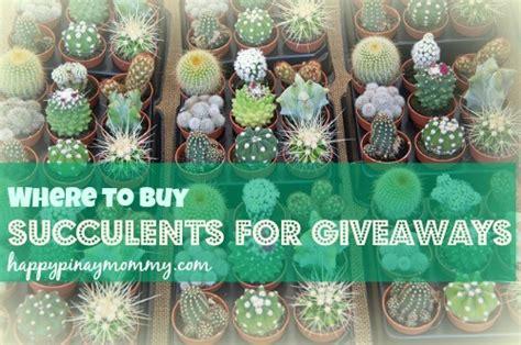 Giveaway Plants Brisbane - succulent plants for sale succulent plants for sale plants gumtree australia pine