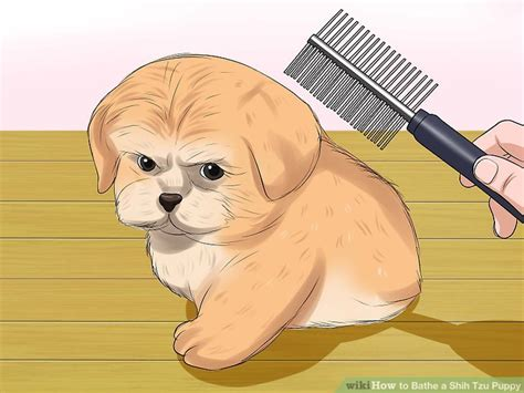 how to bathe a shih tzu puppy best shoo for shih tzu puppies goldenacresdogs