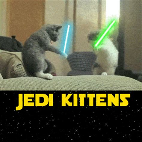 epic boats 26 cat jedi kittens gifs