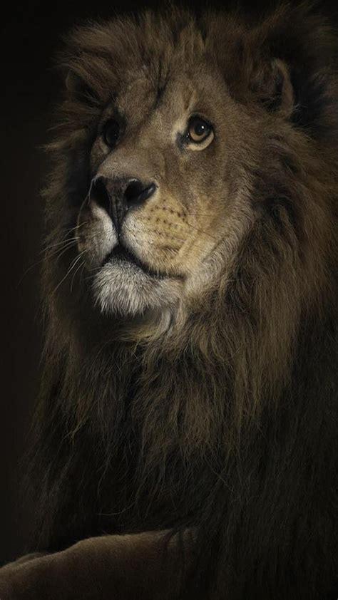 imagenes leones para niños fondos para whatsapp de leones im 225 genes wallpappers