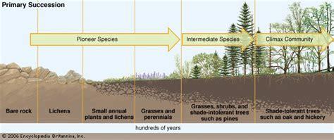 primary succession flowchart ecological succession definition facts britannica