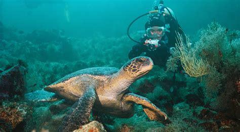 galapagos dive scuba diving at the galapagos islands