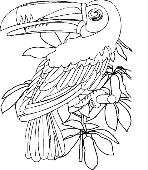 free rtoon toucan coloring pages