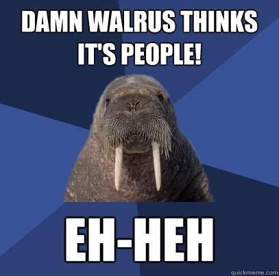 Walrus Meme - damn walrus thinks it s people eh heh web developer walrus quickmeme