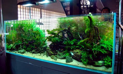 model tema aquascape terbaik disertai contoh gambarnya