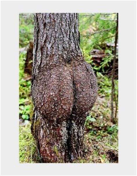 imagenes de cosas asombrosas fotos asombrosas de la web naturaleza asombrosa