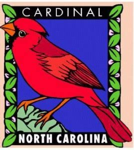 state bird of north carolina nc state bird the cardinal sanford nc pinterest