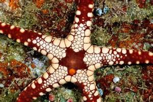 Basket Starfish Information » Home Design 2017