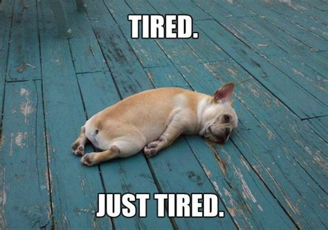 Tired Meme - funny tired dog funny pictures quotes memes jokes