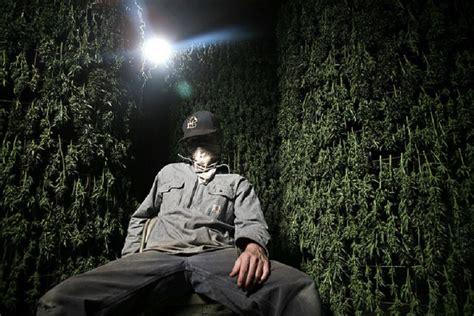 best documentary to top marijuana documentaries to cannabisreports org