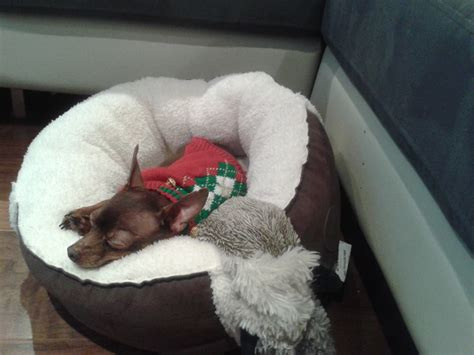 when do puppies start sleeping through the dogs at listener