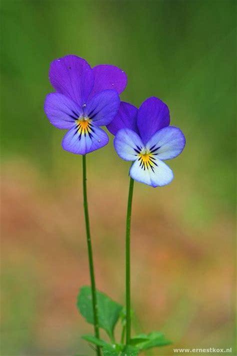 Flowers Violet best 25 violet ideas on colorful