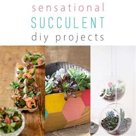 diy succulent projects sensational succulent diy projects the cottage market